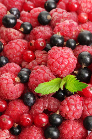 ripe berries with mint, close up  photo