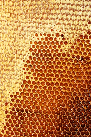 yellow beautiful honeycomb with honey, background Stock Photo - 14854804