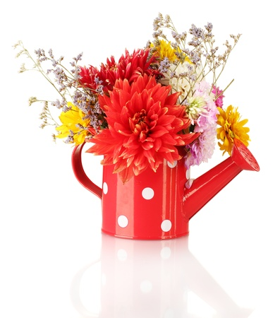 Red watering can with white polka-dot with flowers isolated on white photo