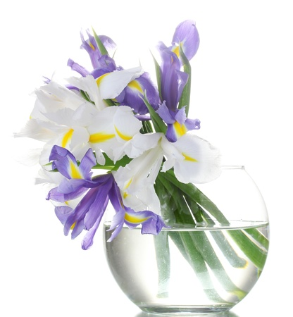 Beautiful bright irises in vase isolated on white photo
