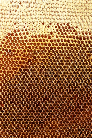 cluster house: yellow beautiful honeycomb with honey, background