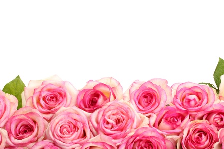 pink and green: beautiful bouquet of pink roses isolated on white