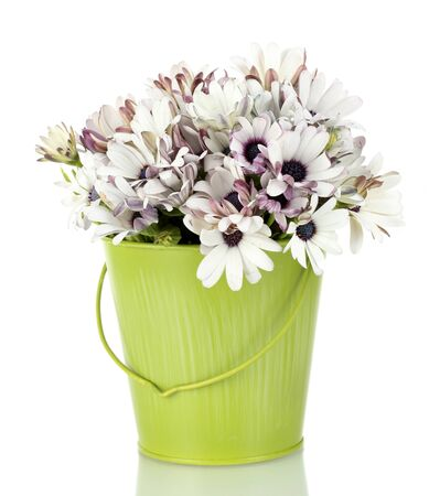 planter: bouquet of beautiful summer flowers in bucket, isolated on white