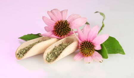 Purple echinacea flowers and dried herbs on pink background Stock Photo - 14954075