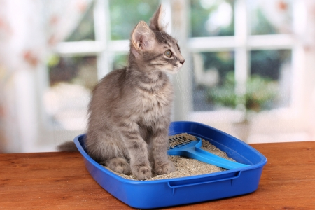 Small gray kitten in blue plastic litter cat on wooden table on window background Stock Photo - 14955328