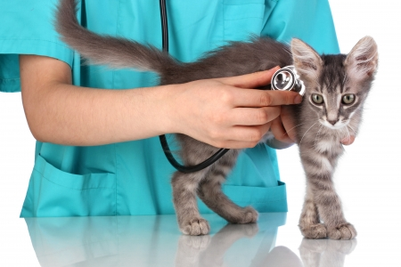 Veterinarian examining a kitten on blue background photo