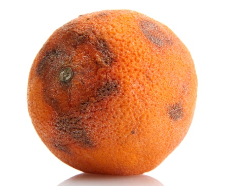 Rotten orange isolated on white Stock Photo - 14936753