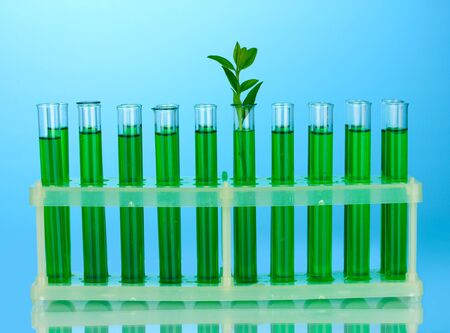 incubate: Test-tubes with a green solution and the plant on blue background close-up Stock Photo