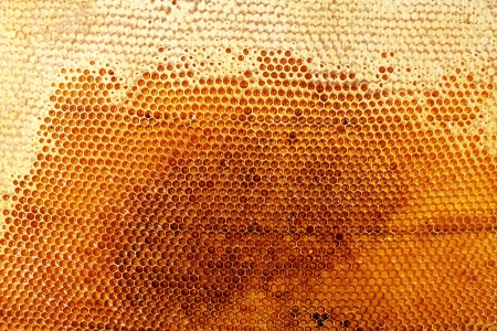 yellow beautiful honeycomb with honey, background Stock Photo - 15002985