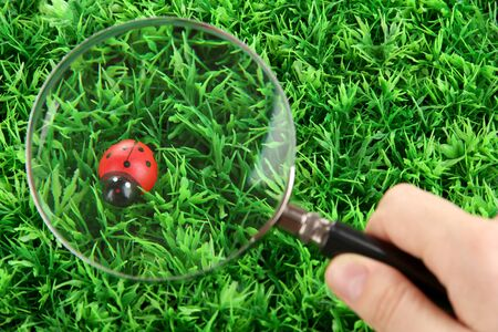 ladybird and magnifying glass in hand on green grass photo
