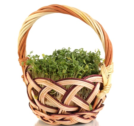 Fresh garden cress on basket isolated on white photo