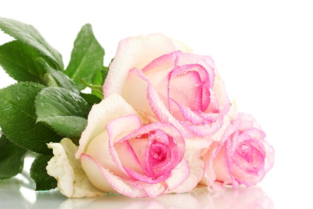 beautiful bouquet of pink roses isolated on white photo