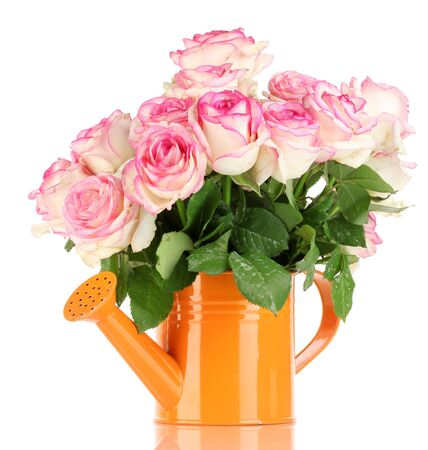 beautiful bouquet of pink roses in watering can, isolated on white photo