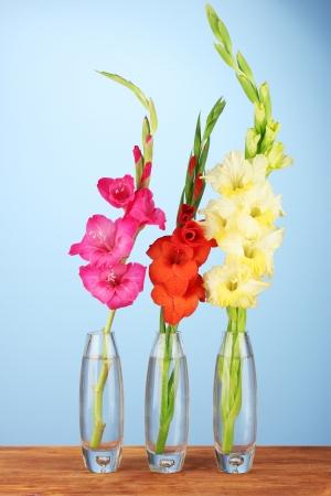 Beautiful Gladioli In Glass Vase On Blue Background Stock Photo