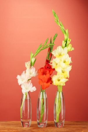 Beautiful Gladioli In Glass Vase On Red Background Stock Photo