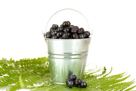 silver fern: ripe blueberries in silver bucket on fern close-up