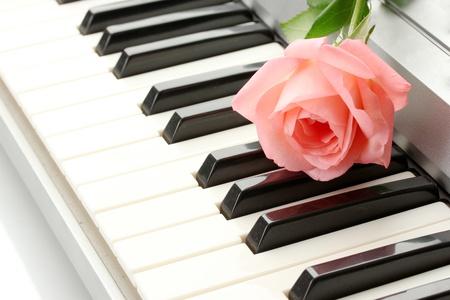 fortepian: tło klawiaturze syntezatora z różą