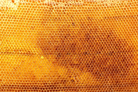 yellow beautiful honeycomb with honey, background Stock Photo - 15104605