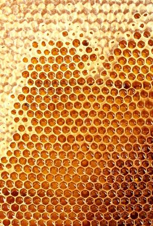 hive: amarillo hermoso panal con miel, fondo