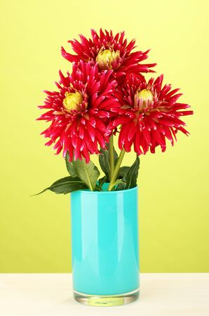 Beautiful red dahlias in vase on green  background close-up photo