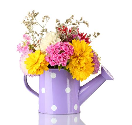 Purple watering can with white polka-dot with flowers isolated on white photo