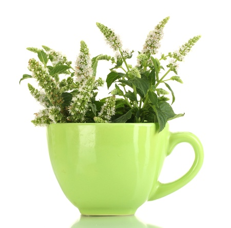 fresh mint with flowers in cup, isolated on white photo