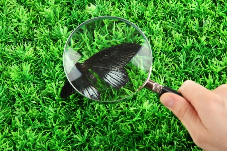 butterfly and magnifying glass in hand on green grass photo