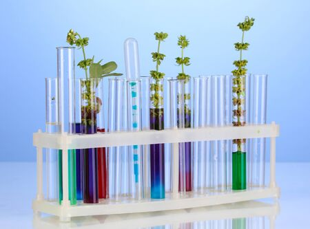 incubate: Test-tubes with a colorful solution and the plant on blue background close-up
