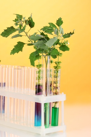 Test-tubes with a colorful solution and the plant on yellow background close-up photo