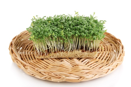 Fresh garden cress on wicker cradle isolated on white photo