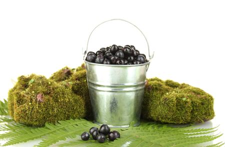 Blueberries in bucket on moss and fern background close-up photo