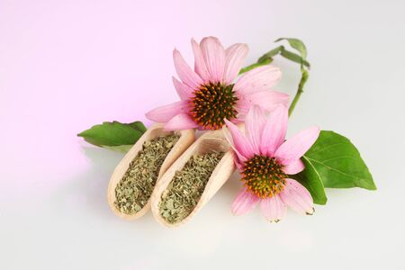 Purple echinacea flowers and dried herbs on pink background Stock Photo - 15368919