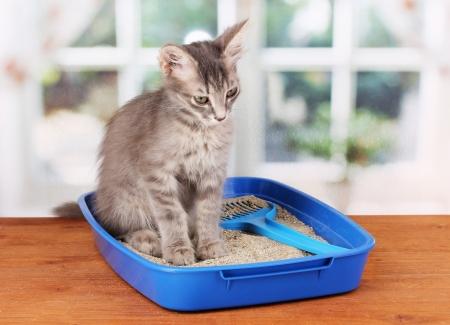 arena: Pequeño gatito gris gato azul basura de plástico en la mesa de madera en el fondo de la ventana