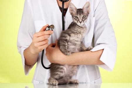 V�t�rinaire examinant un chaton sur fond vert