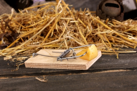 memorabilia: Mousetrap with a piece of cheese close-up in barn on wooden background