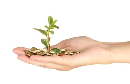 womans hand are holding a money tree on white background close-up photo