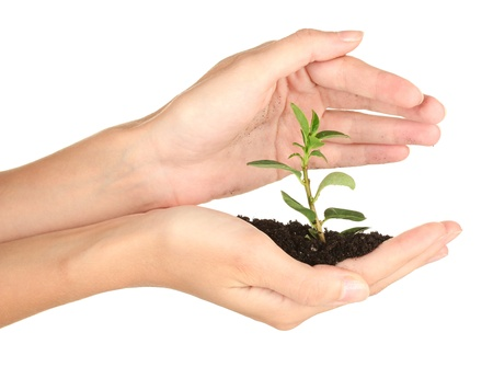 womans hands holding a plant growing out of the ground, on white background close-up photo