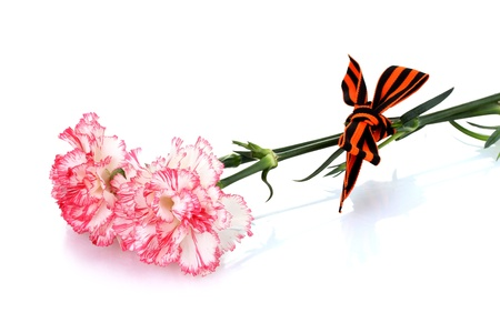 carnations and St. George's ribbon isolated on white Stock Photo - 15395677