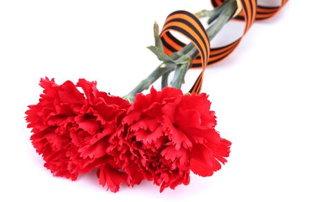 carnations and St. George's ribbon isolated on white Stock Photo - 15416302