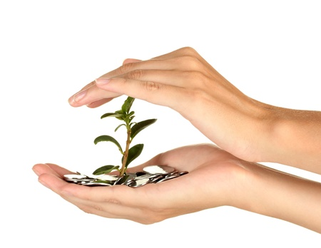 woman's hands are holding a money tree on white background close-up Stock Photo - 15457274