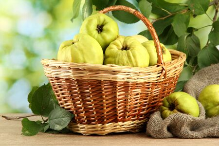 sweet quinces with leaves in basket, on green background Stock Photo - 15458357