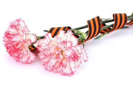 carnations and St. George's ribbon isolated on white Stock Photo - 15457425