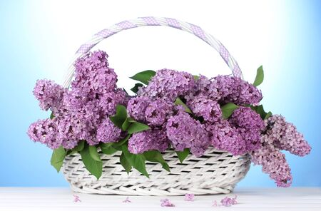 beautiful lilac flowers in basket on blue background Stock Photo - 15458863
