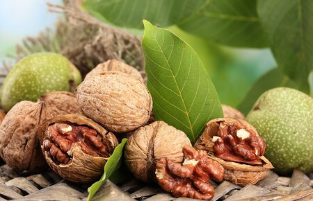 walnuts with green leaves in garden, on green background Stock Photo - 15545322