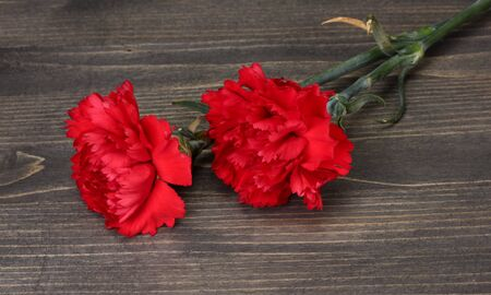 Two carnation on wooden grey background photo