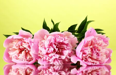 Three pink peonies on green background photo