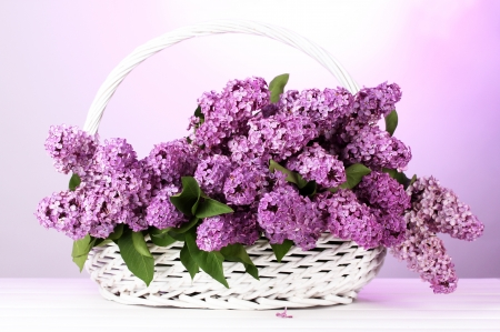 beautiful lilac flowers in basket on purple background Stock Photo - 15658971