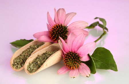 Purple echinacea flowers and dried herbs on pink background photo