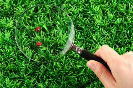 ladybirds and magnifying glass in hand on green grass photo