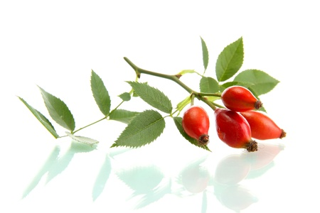 ripe hip roses on branch with leaves, isolated on white  photo